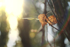 _DSF9411 (Evren Unal Photography) Tags: leaf tree colors fujifilm green dof bokeh closeup alone winter is coming autumn carlzeiss touit2850m touit color beatifull yellor sky ngc depth field outdoor animal foliage plant texture people