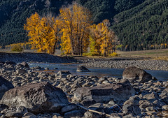 Lamar River fall color (chasingthewildoutdoors) Tags: yellowstonepark yellowstone landscape chasingthewildoutdoors landscapes fall colors color river rocks trees forest canon 5dmkii