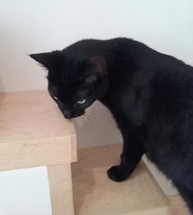 (sftrajan) Tags: kitteatealounge cats kittycat felines gatos tabbies sanfrancisco