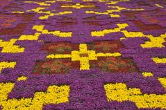 Tulip Carpet (Efkan Sinan) Tags: flower türkiye istanbul turquie türkei tulip tr tulipa turchia çiçek lale laledevri tulipseason tulipcarpet