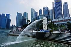 The Merlion, Singapore (singaporebugtracker) Tags: singapore skyscrapers merlion eulogy singaporeriver gardencity shentonway leekuanyew merlionpark lioncity singaporetourismboard singaporebugtracker stamfordrafles fishtaillion