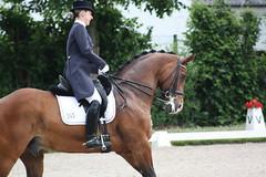 IMG_1702 (dreiwn) Tags: horse pony aachen pferd equestrian horseback horseriding chio dressage hnger reitturnier dressur 2013 pferdekopf dressuur pferdesport pferdehnger turnierreiten chioaachen