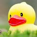 huge rubber duck.