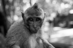 portrait of a monkey 2