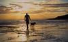 Sunset dog walk at low tide_c (gnarlydog) Tags: sunset dog reflection beach walking lowtide silhoutte
