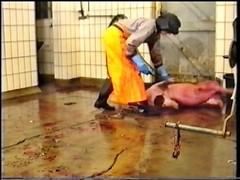 DVD_VIDEO_RECORDER-8 (schlachter1234) Tags: schlachten metzgerin schlachterin