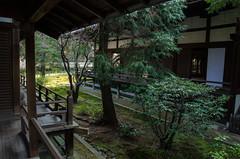 Shoren-in in the Spring, Kyoto /  (Kaoru Honda) Tags: city green nature japan landscape temple japanese evening spring nikon kyoto       shorenin  higashiyama       shoreiin d7000