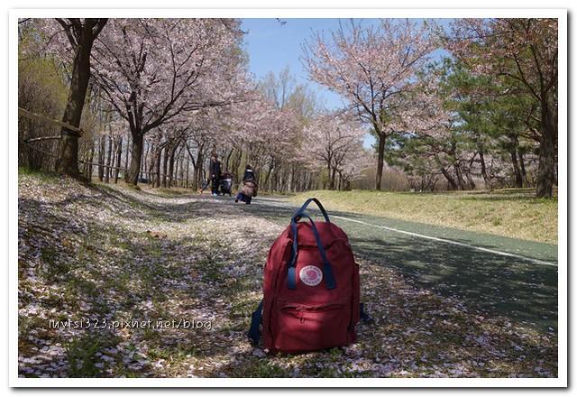 일산호수공원22