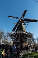 Windmhle (swissgoldeneagle) Tags: holland netherlands windmill d750 niederlande keukenhof zuidholland windmhle lisse windmuehle