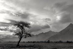 (ajinkyagosavi) Tags: travel sky blackandwhite bw india mountains tourism nature monochrome clouds canon landscape photography mono asia desert dry az explore kashmir silhoutte bnw himalayas ladakh nubravalley jammukashmir lehladakh 7dmarkii 7dmarkiief18135mmf3556