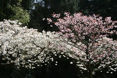 Tremendous Trees (NJKent) Tags: uk trees woods blossom herefordshire queenswood dinsmore saveearth