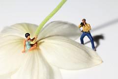 Flower Photography (Crisp-13) Tags: noch ho figure lady woman model swimsuit posing flower japanese anemone fotografen 15571 faller badegaste bathers camera photographer