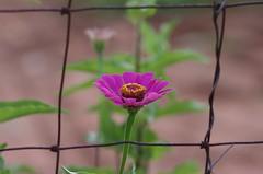 Through A Fence (bamboosage) Tags: takumar 200mm f35 preset m42