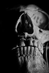 Skull (1)_marked (LewisWhitePhotos) Tags: skull skeleton bones human biology studio studiosetup setup blackandwhite reflection detail photo photography picture creepy scary unusual head studioshoot monochrome black background surreal