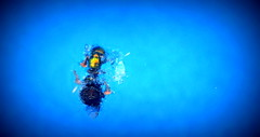 (timetomakethepasta) Tags: messy fly insect blue water swimming pool new york photography outdoors floating debris meaningless
