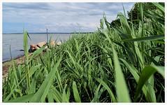 (czorneboh) Tags: sea beach grass strand germany landscape baltic insel gras landschaft ostsee mecklenburg poel gollwitz