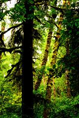 B1BBEST VAN DOZER WOODS-03808 (Gerry Slabaugh) Tags: oregon coast gerryslabaugh green van dozer woods trees mossy