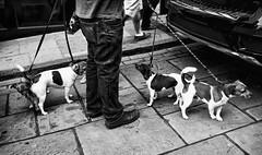Should we stay or should we go now ... (dannicamra) Tags: street urban bw dog white black nikon hund sw monochrom schwarz weis strase d5100