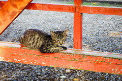 Today's Cat@2016-08-03 (masatsu) Tags: cat catspotting thebiggestgroupwithonlycats pentax mx1