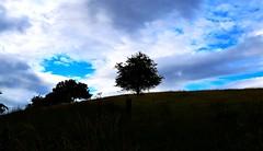 Lonely tree (OutOutxx) Tags: milngavie tree nature scotland nikond3300 outdoors bonniescotland green blueskies summer