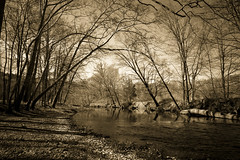 Peaceful place -1- (CTfoto2013) Tags: shadow ombre woodland riviere coursdeau brook water eau light lumiere river pomperaugriver sousbois audubon southbury nature lumix panasonic gx7 mirrorlesscamera micro43 vintage retro sepia monochrome outdoor forest landscape tree plant reflections reflets arbres trees courant rives newengland southbritain connecticut atmosphere mood serene park paisible peaceful calm calme serein ambiance galets pebbles rocks bentoftheriver spring printemps