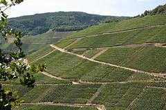 ckuchem-1457 (christine_kuchem) Tags: ahrtal anbau anbaugebiet eifel felsen rotweinwanderweg schiefer schieferfelsen sommer weinanbau weinberg weintraubenanbau weintrauben