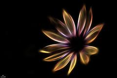 . (Ale C Foto) Tags: fiore flower natura fractalius digitale digital eos nero italy italia postproduzione photoshop alecfoto alessandrocas arte astratta canon colori artificiale 1100d 55250 petali