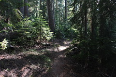 The trail was like this for the last 6 miles (rozoneill) Tags: maiden peak trail waldo lake pacific crest oregon hiking willamette pass gold skyline odell butte volcano forest eugene