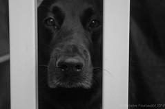 Kira (Abendlicht) Tags: 2016 kira pet black cute dog fur k7 nose pentax snout