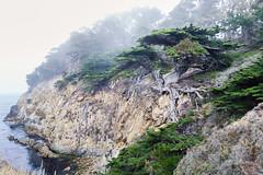 Point Lobos, October 2016 #4 (satoshikom) Tags: canoneos60d canonef1635mmf28liiusm pointlobosstatenaturalreserve oldveterancypress cypressgrove californiastateparks californiacoast weekend