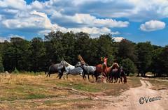 -   (Vesur) Tags:  bulgaria wildhorses