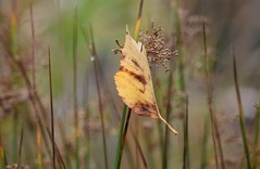 (careth@2012) Tags: leaf fall autumn scene scenery scenic view nature