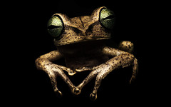Selfie (Francesc Candel) Tags: selfie frog rana selfportrait autorretrato naturaleza nature