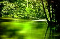 tranquility... (eggii) Tags: tomaszwmazowiecki niebieskierda rezerwat park green reflection trees
