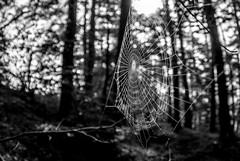 (Bogdan_b) Tags: black white bw trees spider web sony alpha fisheye sigma 10mm kenko forest romania codlea