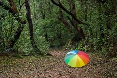 Matheran-5476 (Satish Chelluri) Tags: satishchelluri satishchelluriphotography matheran maharastra umbrella mansoon