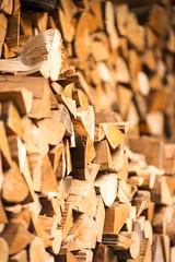 winter fuel (grahamrobb888) Tags: nikond800 afnikkor80200mm128ed forestry fuel wood