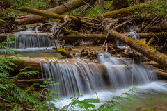12 Minutes! (stevenbulman44) Tags: waterfalls canon forest water britishcolumbia summer 1740f40l landscape river serene outdoor waterfall stream tree green fallen