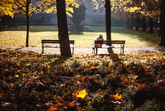 retreat (ewitsoe) Tags: alone lady soolitude single ewitsoe autumn leaves falling goldenfall bench trees park woman city cityscape sunlight sunny light shadow hat tree urban life living