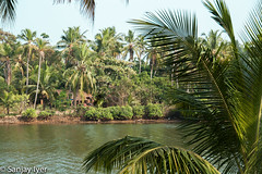 Backwaters (S Sanjay Iyer) Tags: landscape flickr cannanore