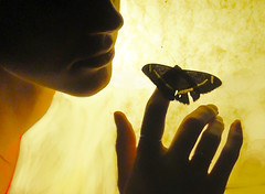 The heart has his own language (Time-Freeze) Tags: light butterfly soul rumiquotes