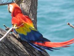 hula hoop sat 076 (Learn, Love, Conserve) Tags: hulahoop saprissa puntaleona feriaverdearanjuez