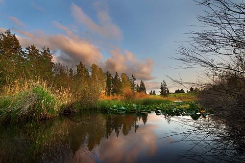 park sunset lake landscape washington kent northwest d600 westernwashington 1424mm