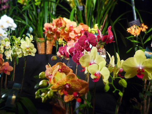 Orchids Take Your Breath Away