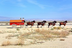 Budweiser Clydesdales on the Runway in the Desert (Joe Lach) Tags: california horses dog airport desert lancaster budweiser runway dalmatian stagecoach foxfield clydesdales 2015 budweiserclydesdales budweiserdalmation losangelescountyairshow joelach