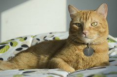 Príncipe (Jane López) Tags: gatos catsitter niñera gatografía