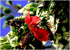RED HIBISCUS (gazza294) Tags: flickr flicker flckr flkr garymargetts gazza294