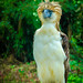 Philippines Eagle