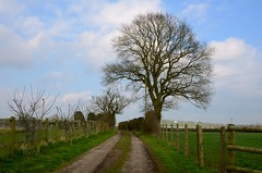 Mayo Farm, Haughton (Ugborough Exile) Tags: uk trees england nikon staffordshire midlands stafford 2015 haughton d7000