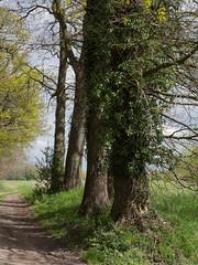 (Jeroen Hillenga) Tags: tree landscape boom groningen landschap westerwolde